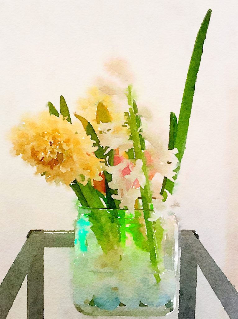 Week Four: Yellow and White Hyacinths
