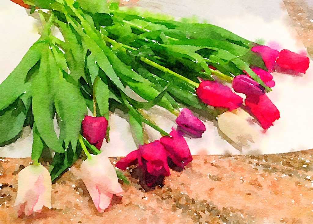 Week One: Fresh Pike Place Market Tulips in Waterlogue