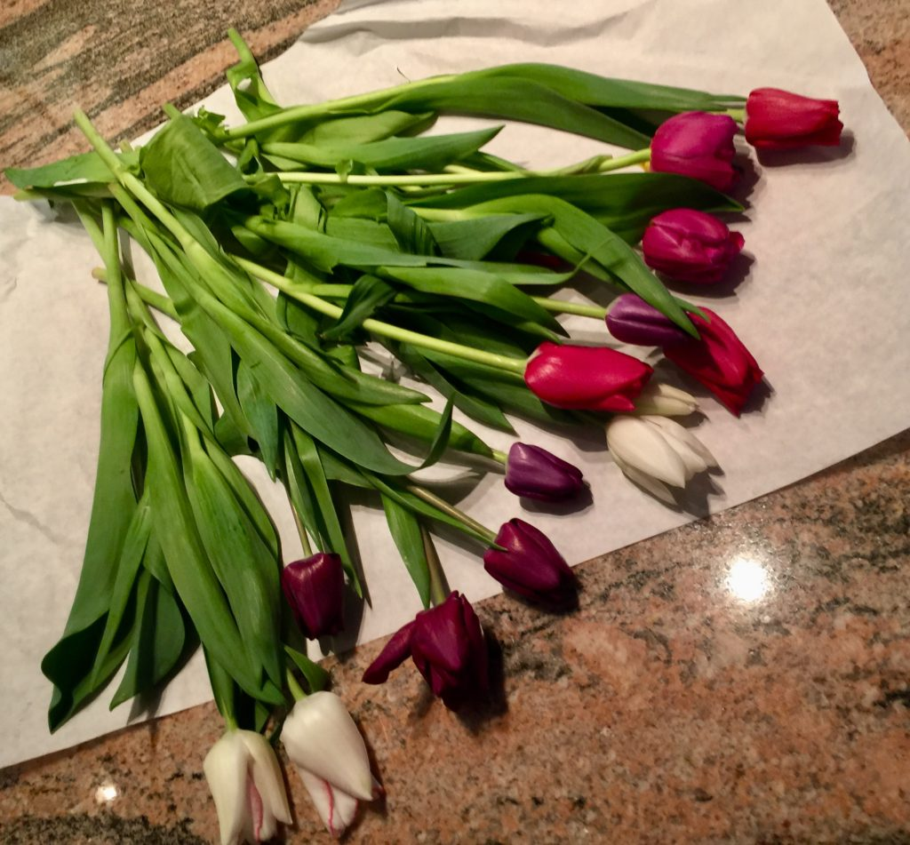 Week One: Fresh Pike Place Market Tulips