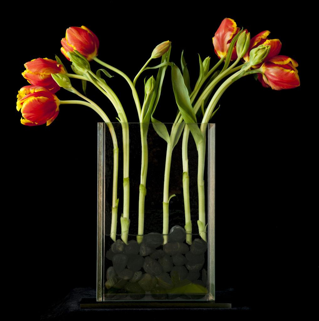 """Orange """"Parrot"""" Tulips"""