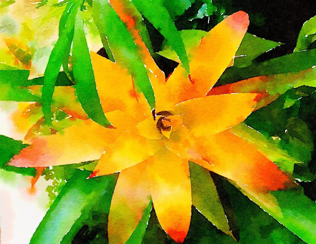 Large Yellow Bromeliad in Waterlogue