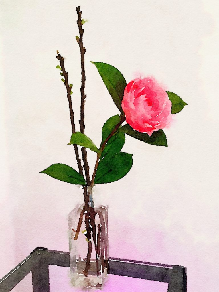 Single Camellia and Two Apple Blossoms in a Simple Glass Vase
