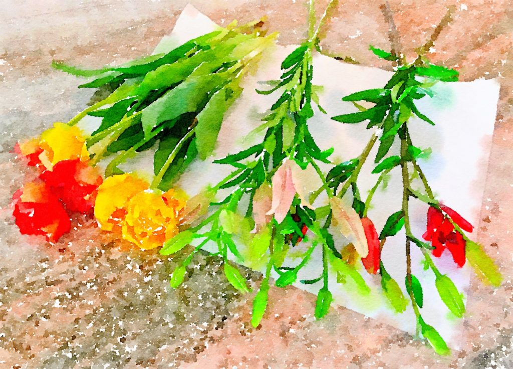 Week Thirteen: Fresh Pike Place Market Flowers in Waterlogue
