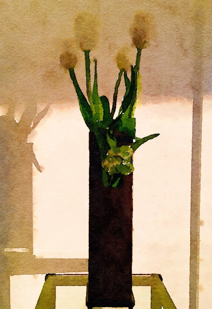 Week Eleven: Five White Tulips in a Black Vase With Shadows