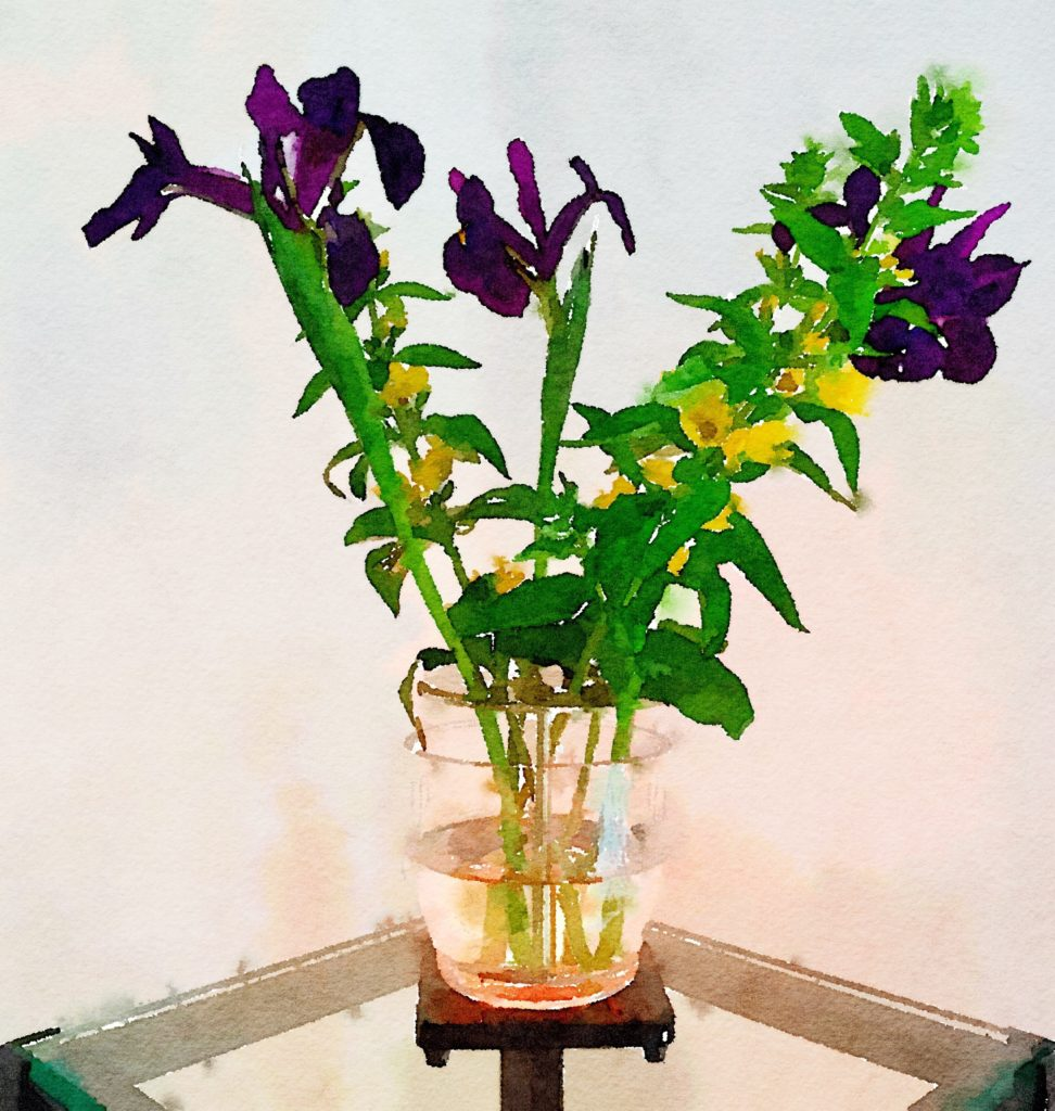 Week Seventeen: Purple Irises and Shrubby Yellow Crest in My Ikebana Vase Version Two