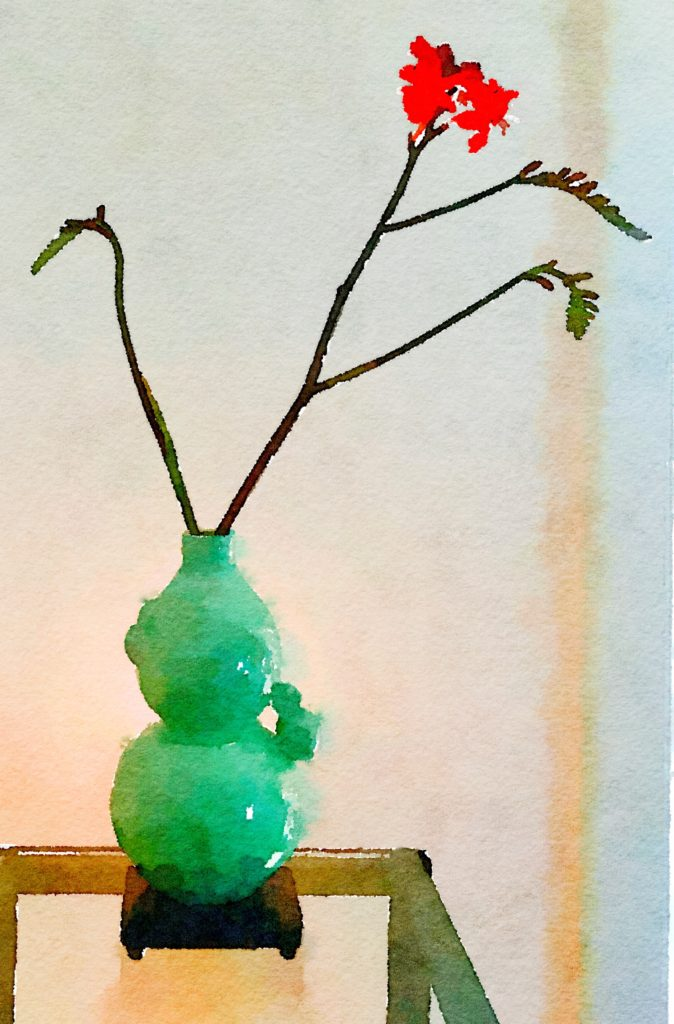 Week Twenty: Single Kangaroo Paw in Celadon Vase