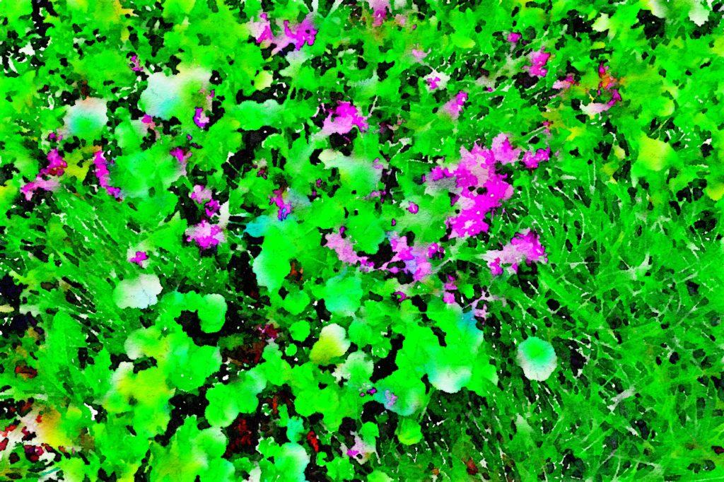 Week Twenty-Two: Floral Color Block 4