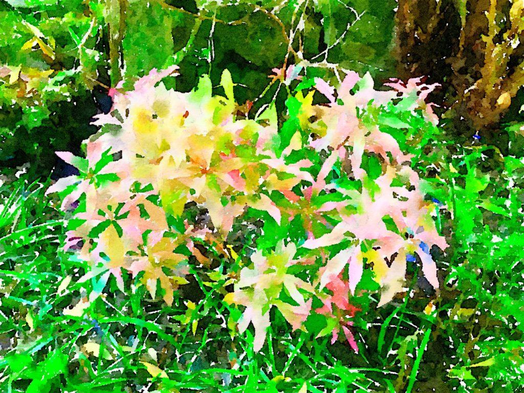 Bouquet-a-Week Project Arduaine Garden Flowery Fireworks