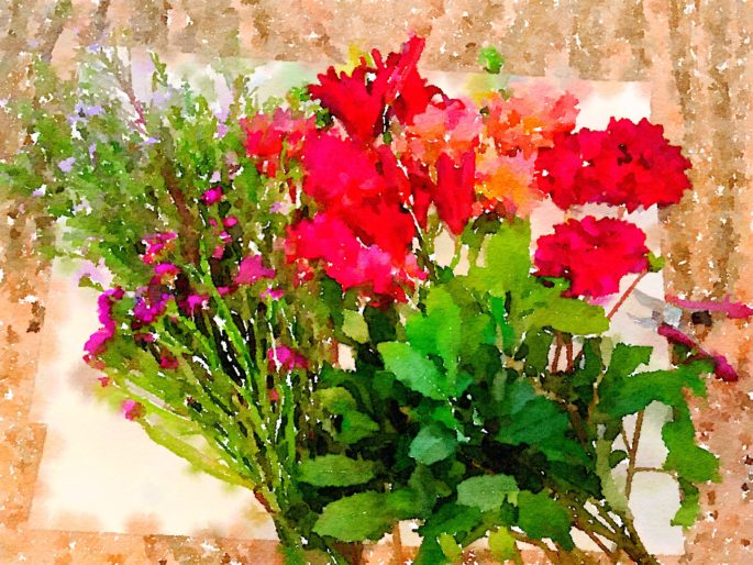 Braiden Blossoms Website Bouquet-a-Week Project Week Thirty-Seven: Fresh Pike Place Market Flowers Laid Out In a Row Painted in Waterlogue