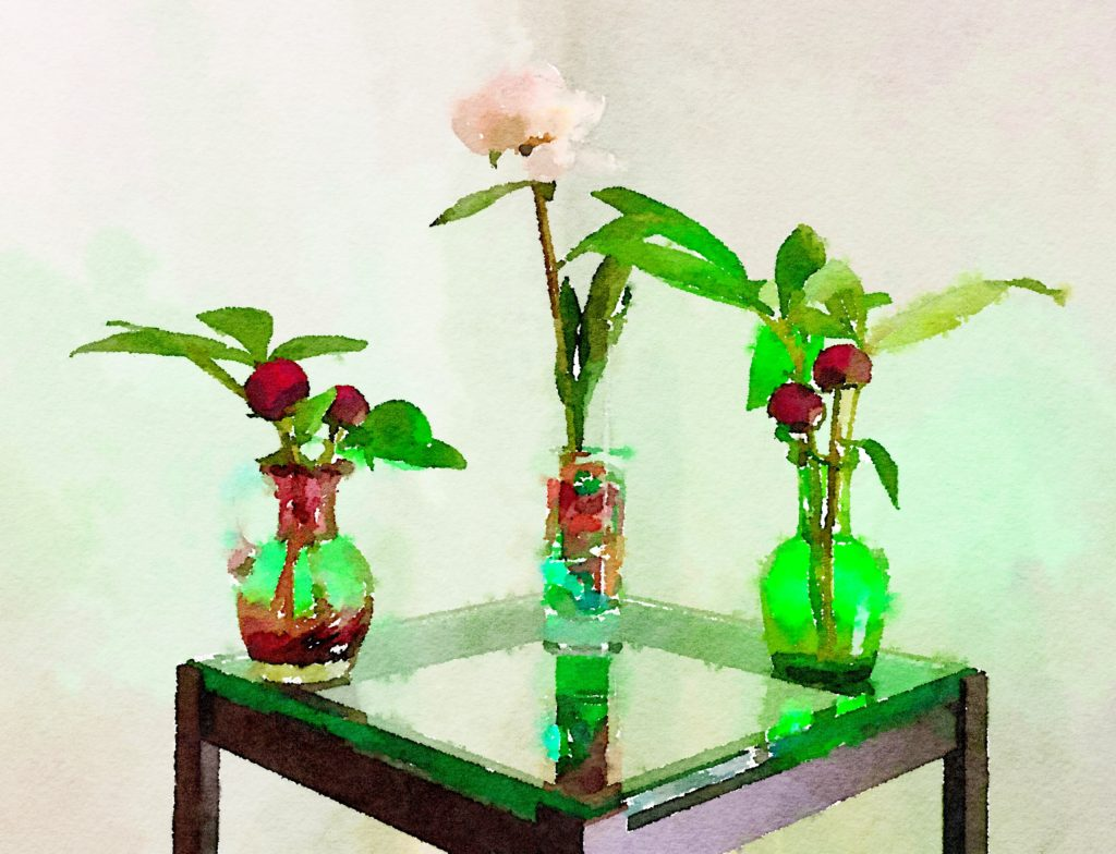 Braiden Blossoms Week Thirty-Two: A Trio of Peonies in Glass Vases in Green Light