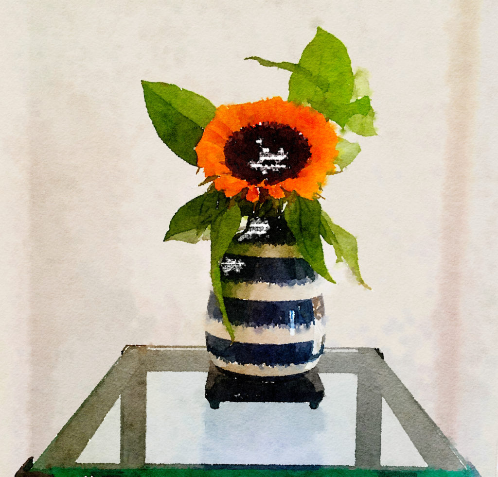 Braiden Blossoms Website Week Thirty-Nine: Giant Sunflower in a Striped Vase