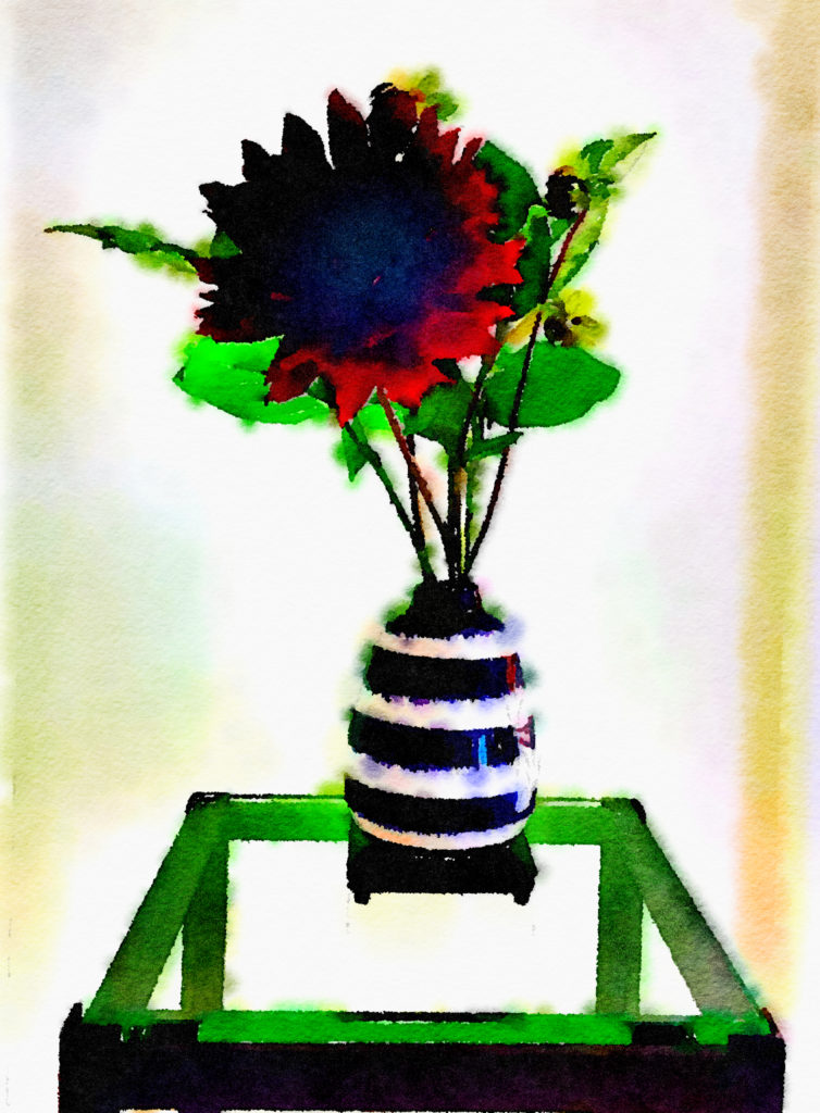 Braiden Blossoms Website Week Thirty-Nine: Giant Scarlet Dahlia in a Striped Vase