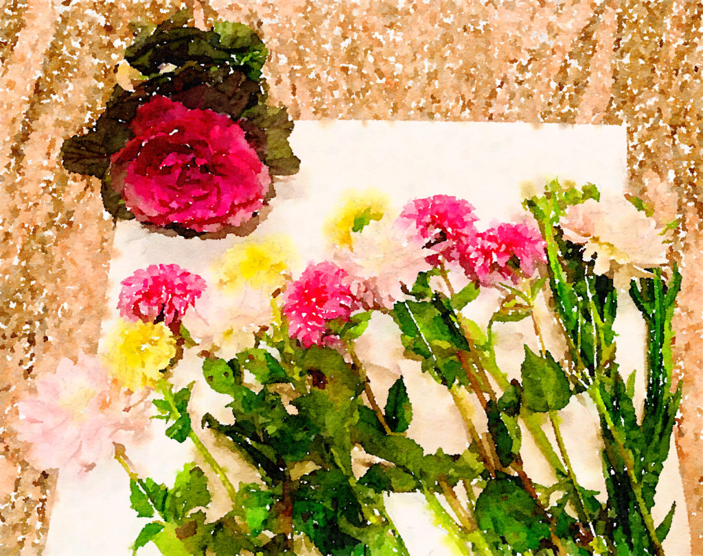 Braiden Blossoms Website Week Forty-Six: Fresh Pike Place Market Flowers Laid in a Row Painted in Waterlogue