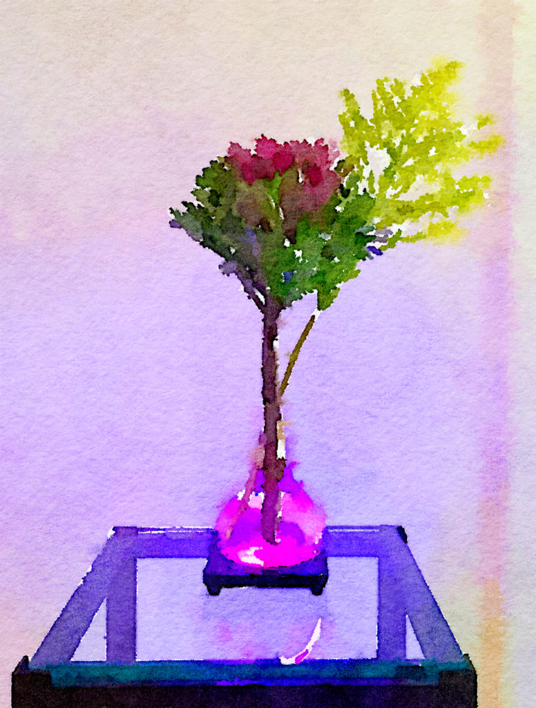 Braiden Blossoms Website Week Thirty-Nine: Cabbage and Goldenrod in a Pink Buddha Vase