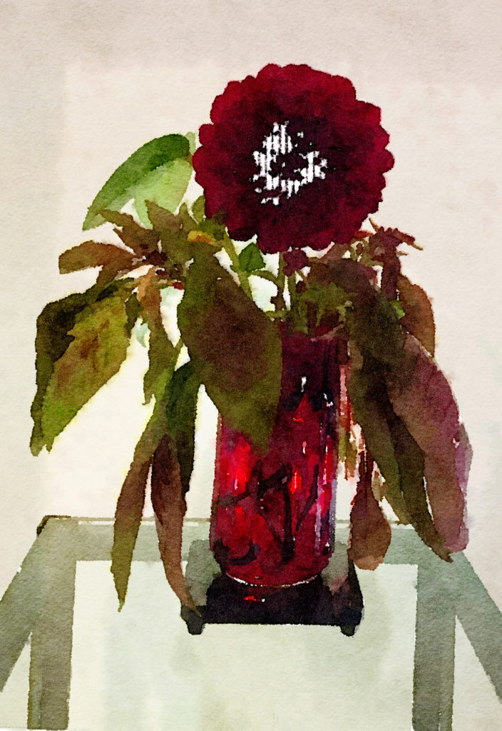 Braiden Blossoms Website Week Forty-Three: Black Dahlia in a Multicolored Ruby Vase