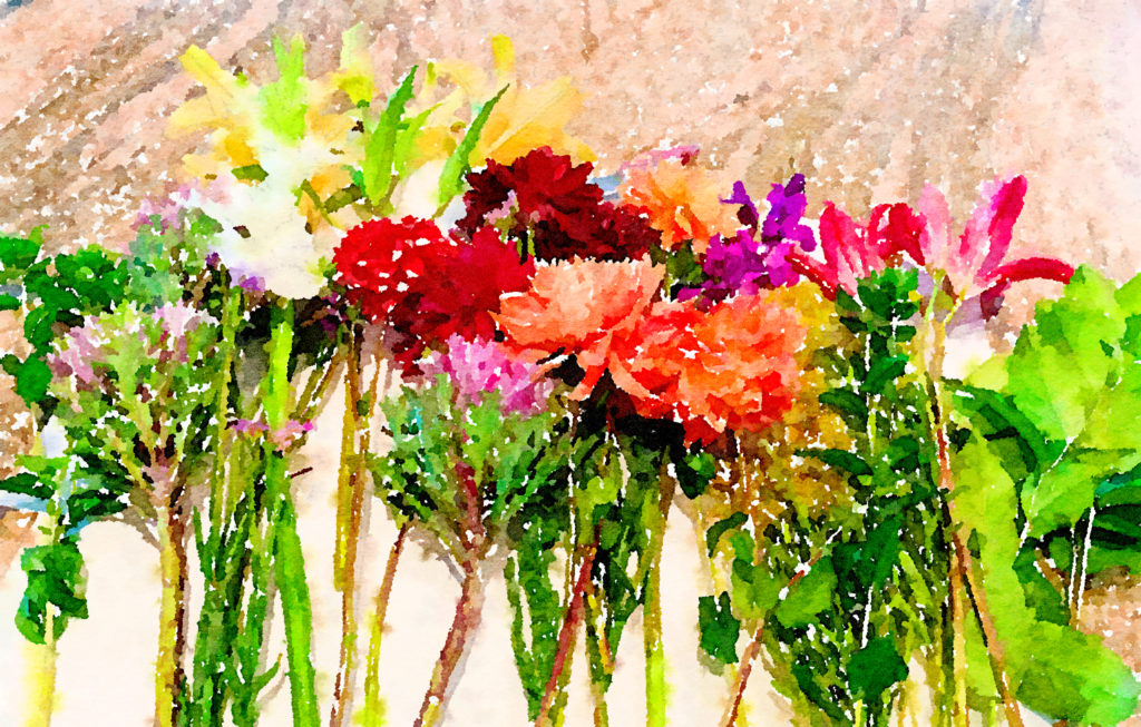 Braiden Blossoms Website Week Forty-Two: Fresh Pike Place Market Flowers Laid in a Row Waterlogue
