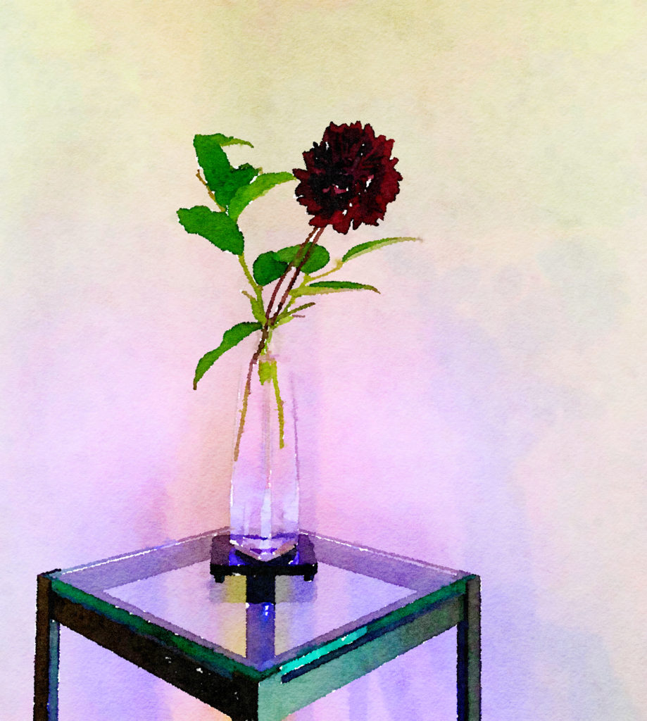 Braiden Blossoms Website Week Forty-Two: Single Black Dahlia in a Clear Glass Vase